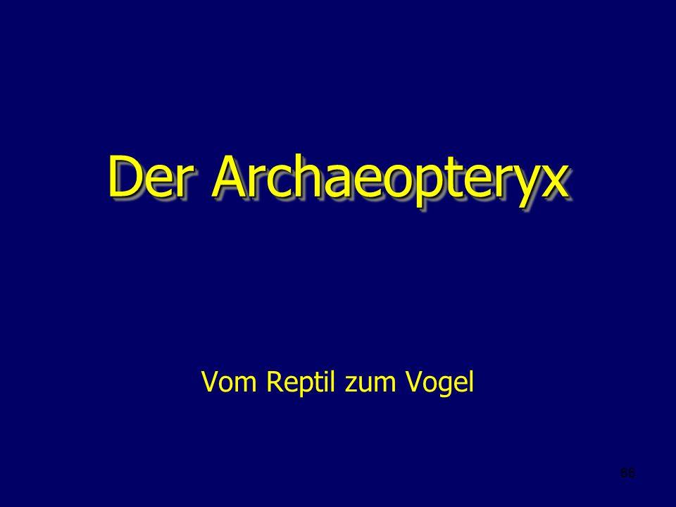 66 Der Archaeopteryx Vom Reptil zum Vogel