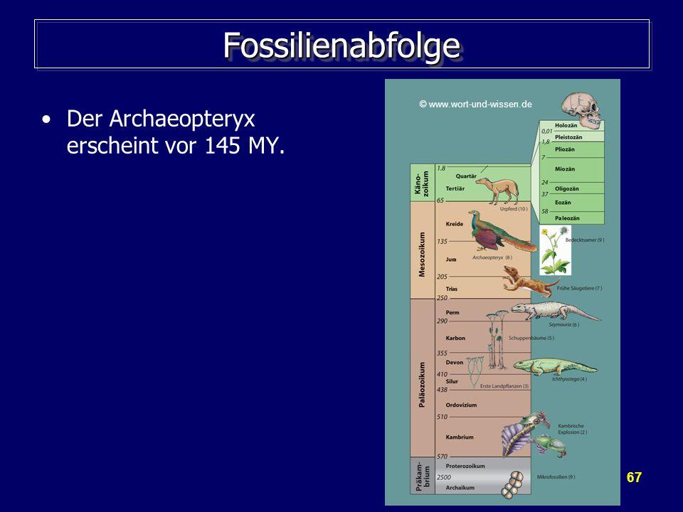 67 FossilienabfolgeFossilienabfolge Der Archaeopteryx erscheint vor 145 MY. © www.wort-und-wissen.de