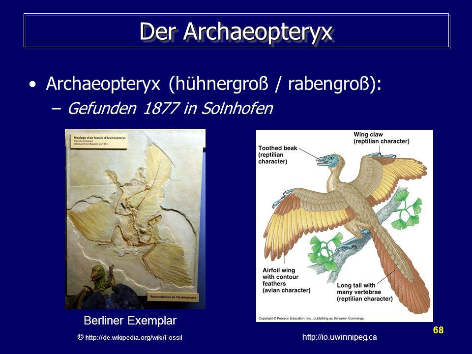 68 Der Archaeopteryx Archaeopteryx (hühnergroß / rabengroß): –Gefunden 1877 in Solnhofen Berliner Exemplar © http://de.wikipedia.org/wiki/Fossil http: