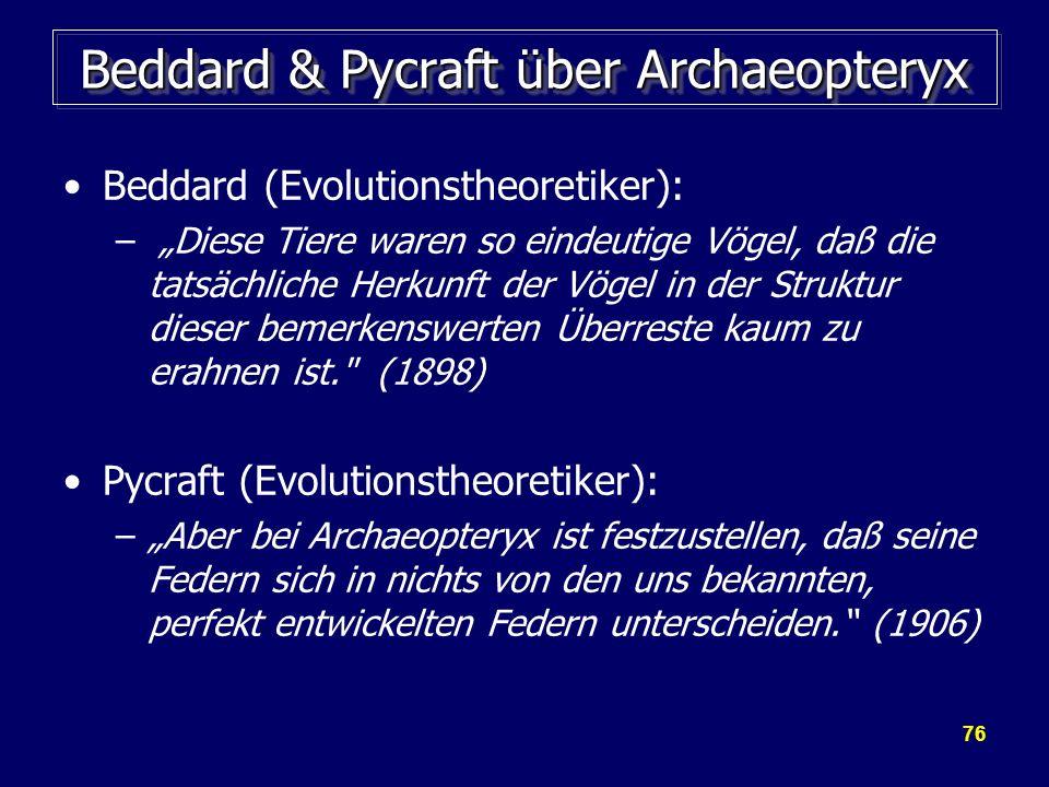 76 Beddard & Pycraft über Archaeopteryx Beddard (Evolutionstheoretiker): – Diese Tiere waren so eindeutige Vögel, daß die tatsächliche Herkunft der Vö