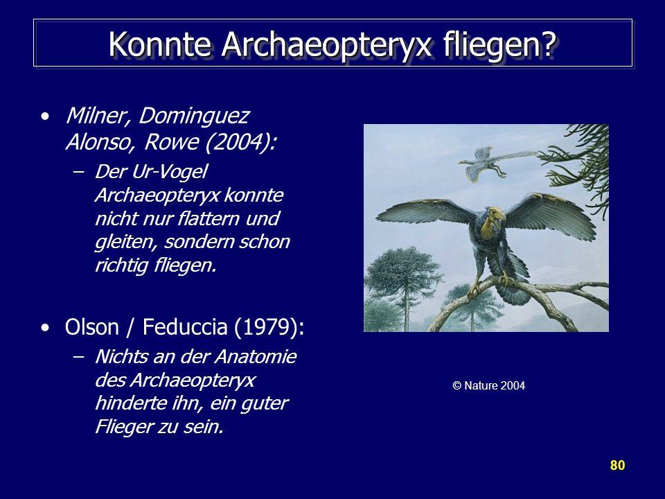 80 Konnte Archaeopteryx fliegen? Milner, Dominguez Alonso, Rowe (2004): –Der Ur-Vogel Archaeopteryx konnte nicht nur flattern und gleiten, sondern sch