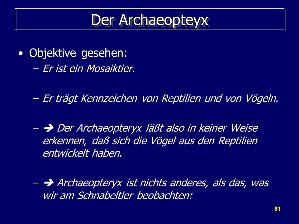 81 Der Archaeopteyx Objektive gesehen: –Er ist ein Mosaiktier. –Er trägt Kennzeichen von Reptilien und von Vögeln. – Der Archaeopteryx läßt also in ke