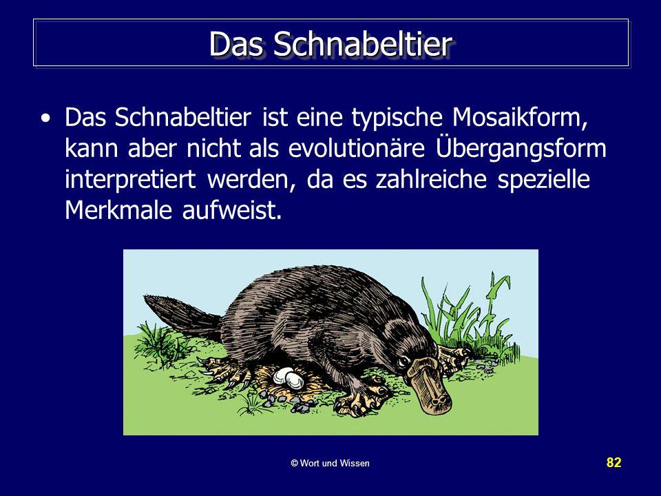 82 Das Schnabeltier Das Schnabeltier ist eine typische Mosaikform, kann aber nicht als evolutionäre Übergangsform interpretiert werden, da es zahlreic