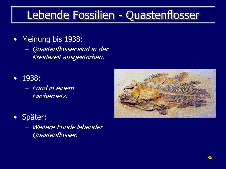 85 Lebende Fossilien - Quastenflosser Meinung bis 1938: –Quastenflosser sind in der Kreidezeit ausgestorben. 1938: –Fund in einem Fischernetz. Später: