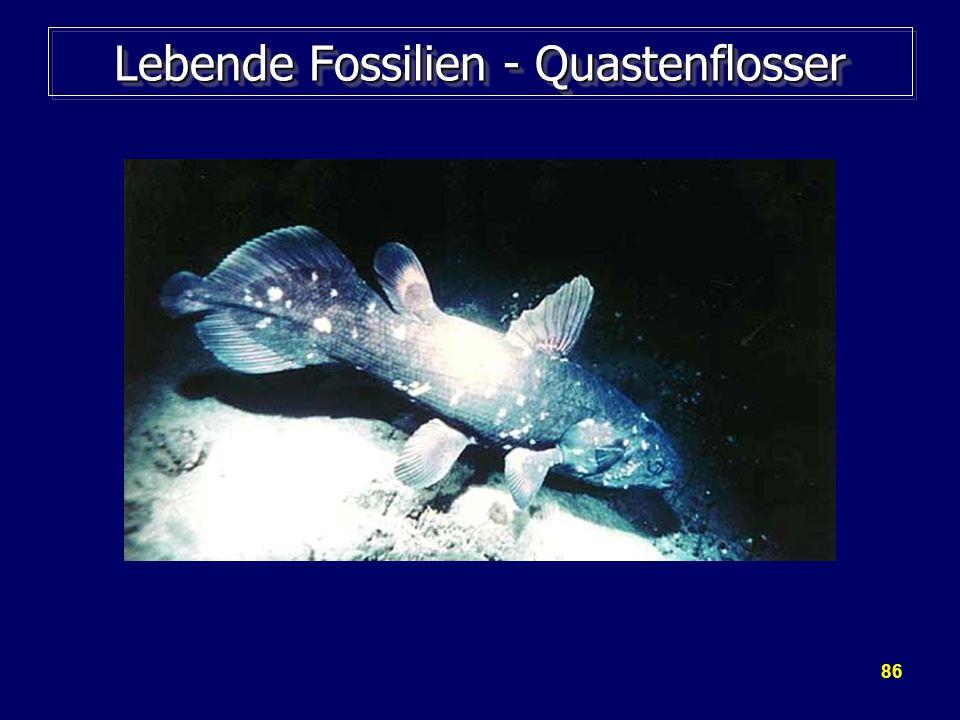 86 Lebende Fossilien - Quastenflosser