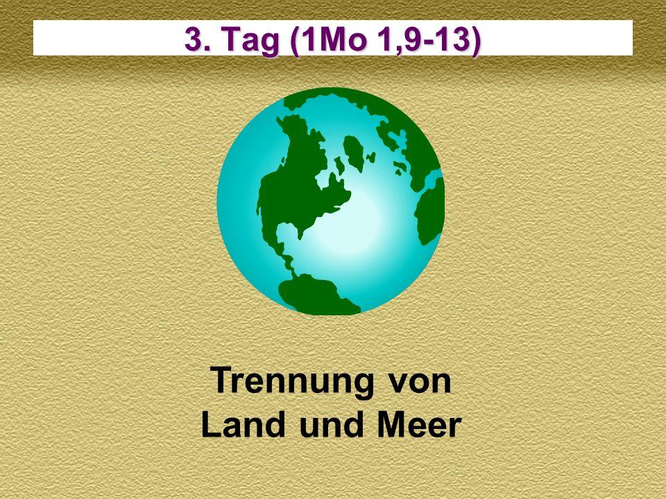 6. Tag (1Mo 1,24-31) Tiere und der Mensch