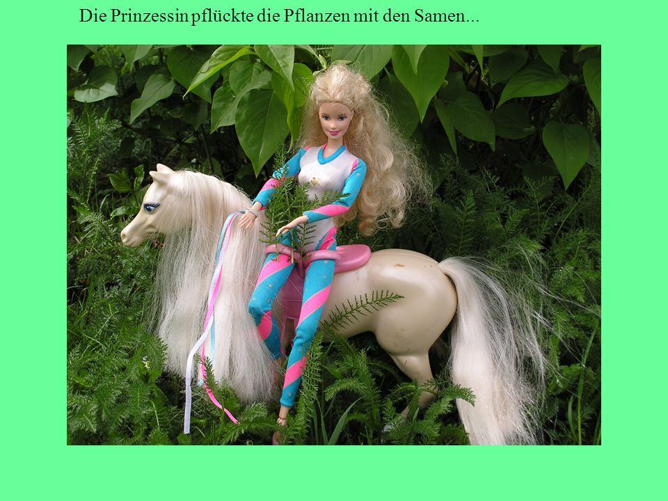 Die Prinzessin pflückte die Pflanzen mit den Samen...