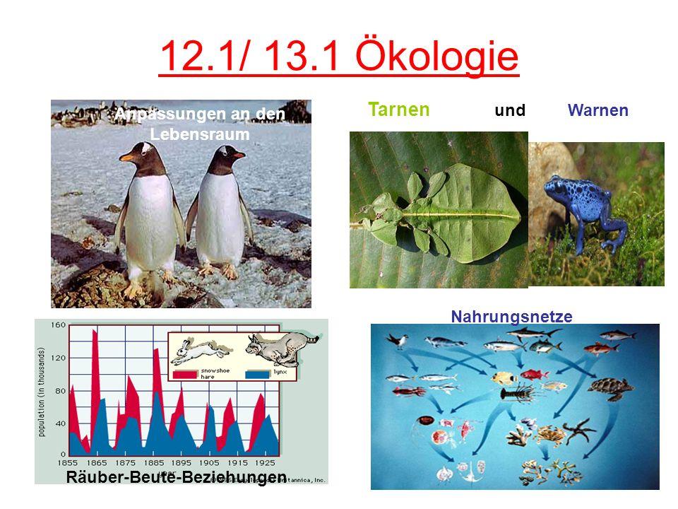 12.1/ 13.1 Ökologie Anpassungen an den Lebensraum Räuber-Beute-Beziehungen Tarnen und Warnen Nahrungsnetze