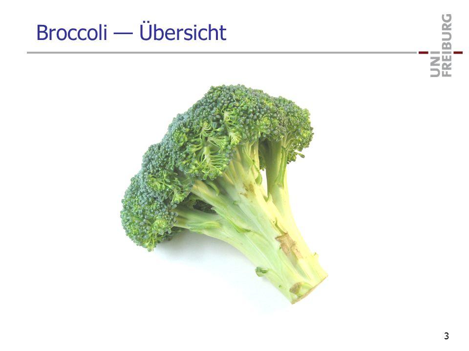 Broccoli Übersicht 3