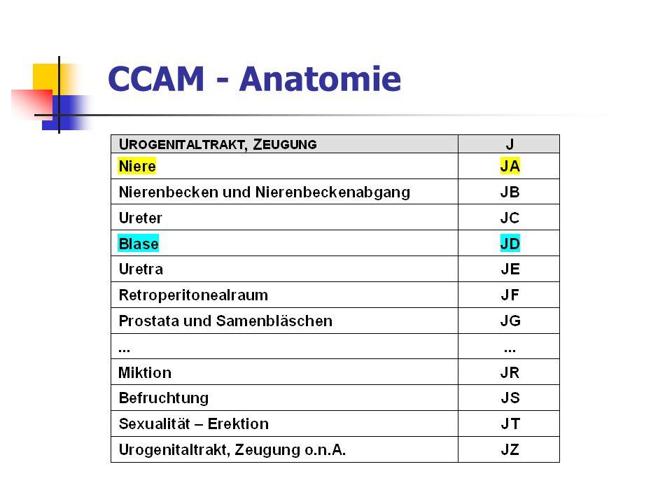 CCAM - Anatomie