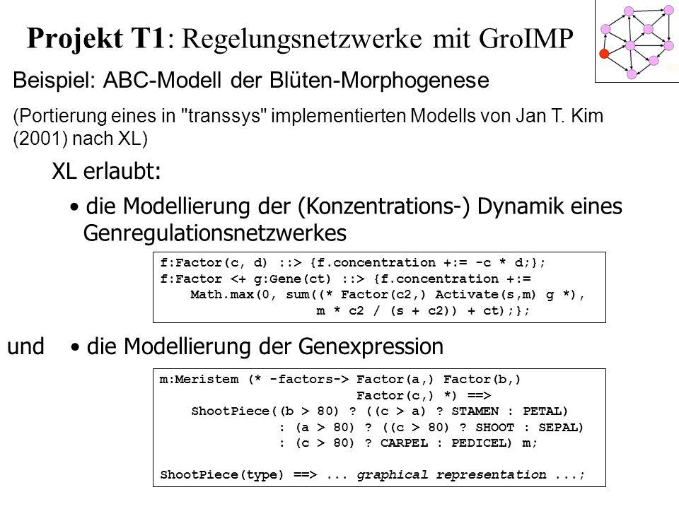 Projekt T1: Regelungsnetzwerke mit GroIMP Beispiel: ABC-Modell der Blüten-Morphogenese (Portierung eines in