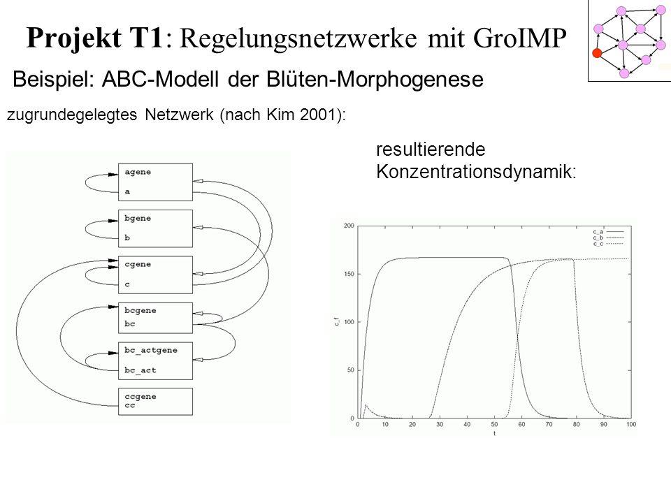 Projekt T1: Regelungsnetzwerke mit GroIMP Beispiel: ABC-Modell der Blüten-Morphogenese zugrundegelegtes Netzwerk (nach Kim 2001): resultierende Konzen