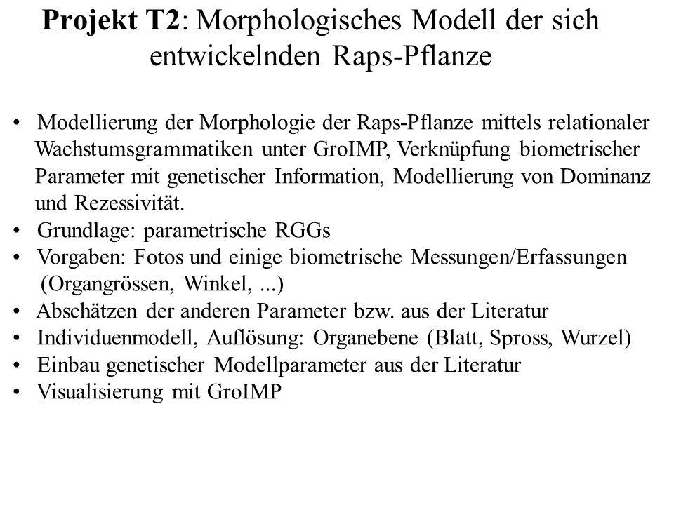 Projekt T2: Morphologisches Modell der sich entwickelnden Raps-Pflanze Modellierung der Morphologie der Raps-Pflanze mittels relationaler Wachstumsgra