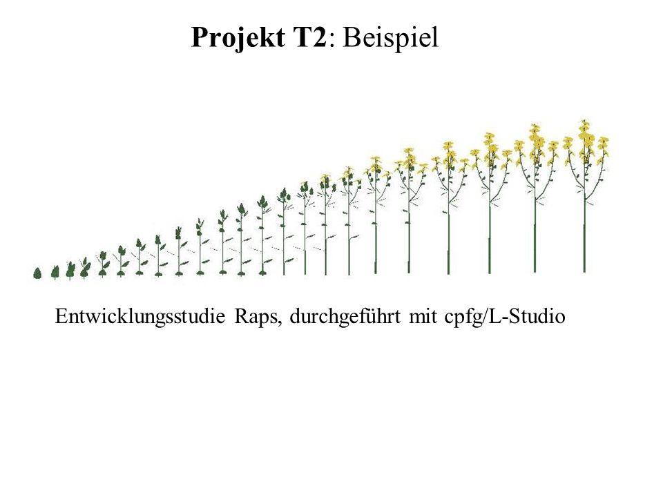 Projekt T2: Beispiel Entwicklungsstudie Raps, durchgeführt mit cpfg/L-Studio