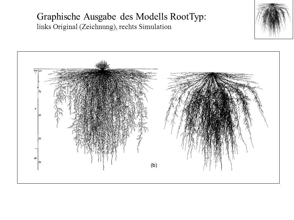 Graphische Ausgabe des Modells RootTyp: links Original (Zeichnung), rechts Simulation