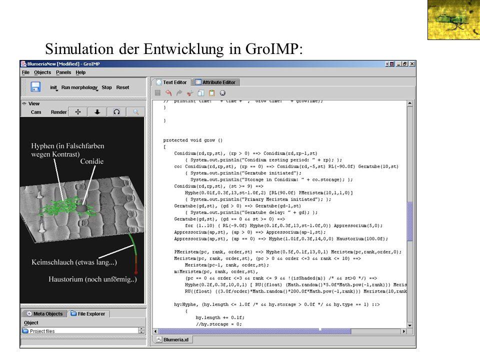 teleomorph Simulation der Entwicklung in GroIMP: