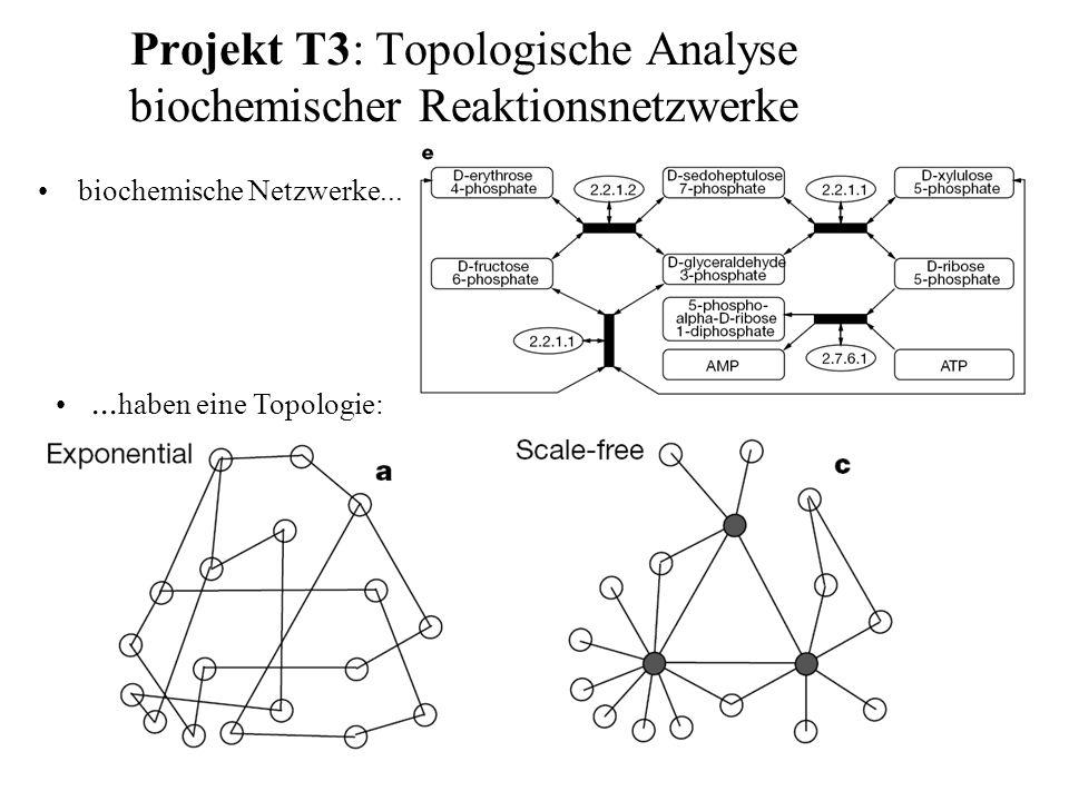 Projekt T3: Topologische Analyse biochemischer Reaktionsnetzwerke biochemische Netzwerke...... haben eine Topologie: