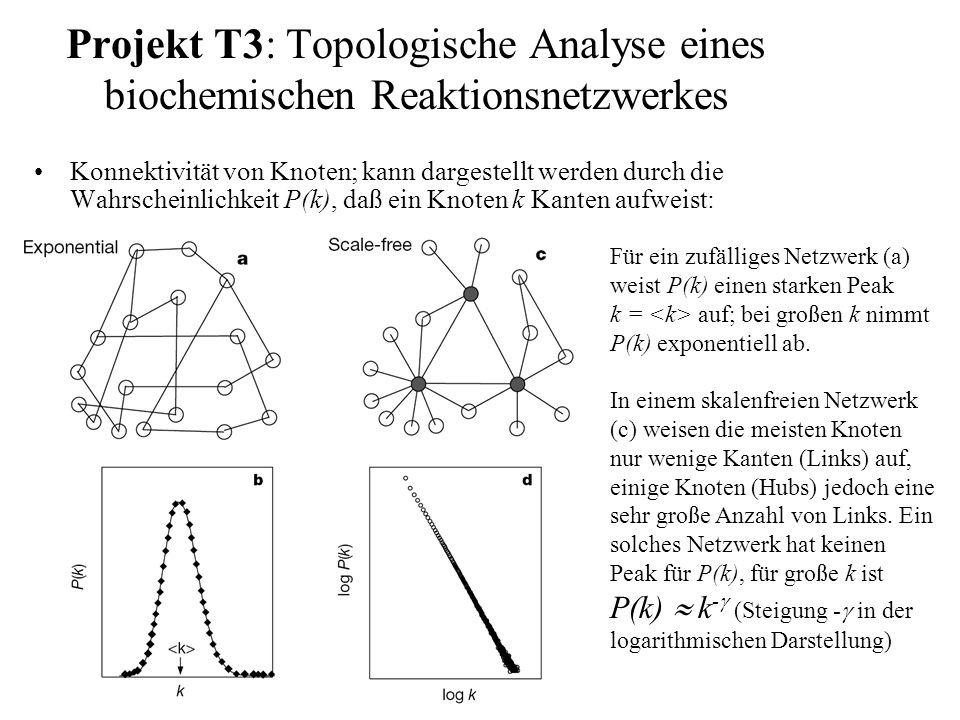 Projekt T3: Topologische Analyse eines biochemischen Reaktionsnetzwerkes Konnektivität von Knoten; kann dargestellt werden durch die Wahrscheinlichkeit P(k), daß ein Knoten k Kanten aufweist: Für ein zufälliges Netzwerk (a) weist P(k) einen starken Peak k = auf; bei großen k nimmt P(k) exponentiell ab.