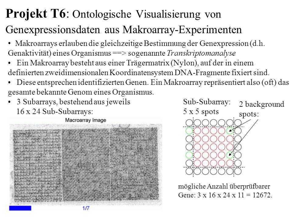 Projekt T6: Ontologische Visualisierung von Genexpressionsdaten aus Makroarray-Experimenten Makroarrays erlauben die gleichzeitige Bestimmung der Genexpression (d.h.