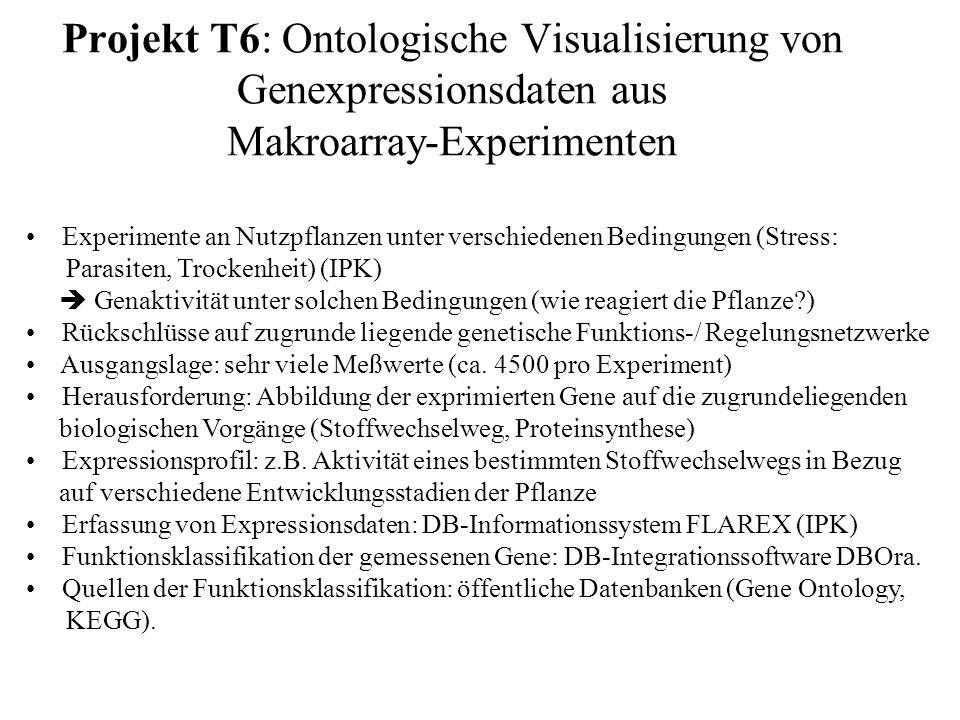 Projekt T6: Ontologische Visualisierung von Genexpressionsdaten aus Makroarray-Experimenten Experimente an Nutzpflanzen unter verschiedenen Bedingungen (Stress: Parasiten, Trockenheit) (IPK) Genaktivität unter solchen Bedingungen (wie reagiert die Pflanze ) Rückschlüsse auf zugrunde liegende genetische Funktions-/ Regelungsnetzwerke Ausgangslage: sehr viele Meßwerte (ca.