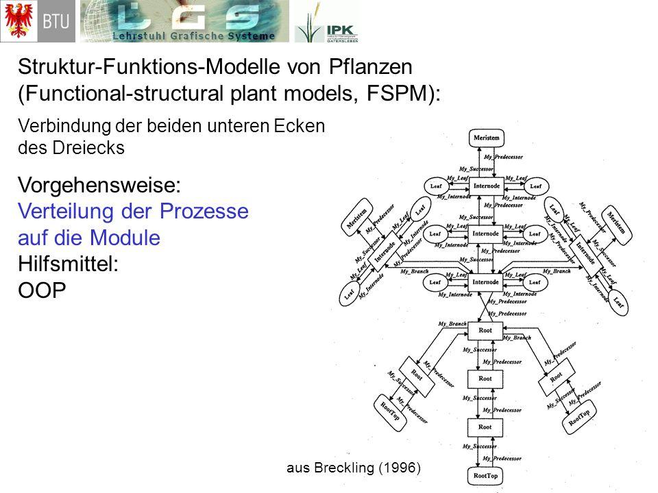Struktur-Funktions-Modelle von Pflanzen (Functional-structural plant models, FSPM): Verbindung der beiden unteren Ecken des Dreiecks Vorgehensweise: V