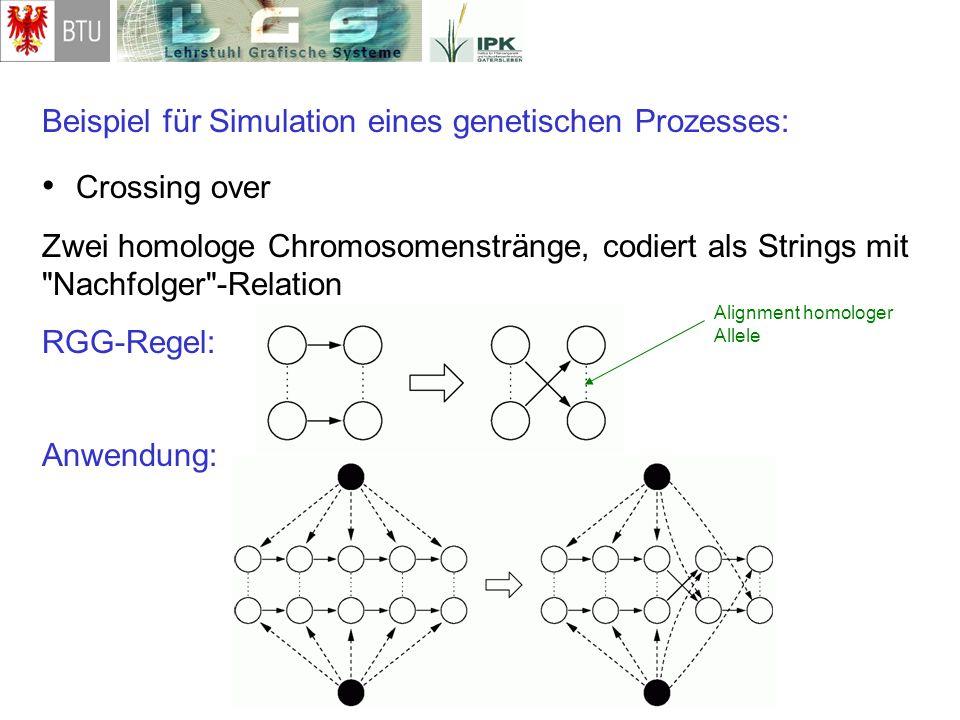 Beispiel für Simulation eines genetischen Prozesses: Crossing over Zwei homologe Chromosomenstränge, codiert als Strings mit