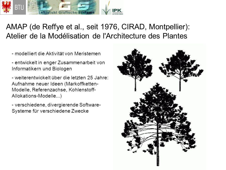 AMAP (de Reffye et al., seit 1976, CIRAD, Montpellier): Atelier de la Modélisation de l'Architecture des Plantes - modelliert die Aktivität von Merist