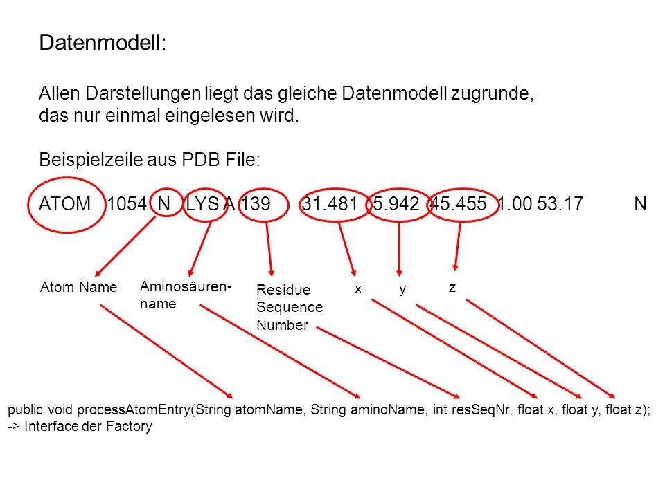 Datenmodell: Allen Darstellungen liegt das gleiche Datenmodell zugrunde, das nur einmal eingelesen wird. Beispielzeile aus PDB File: ATOM 1054 N LYS A