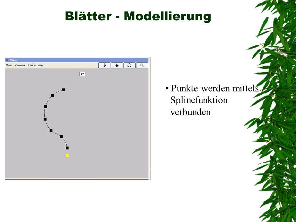 Blätter - Modellierung Punkte werden mittels Splinefunktion verbunden