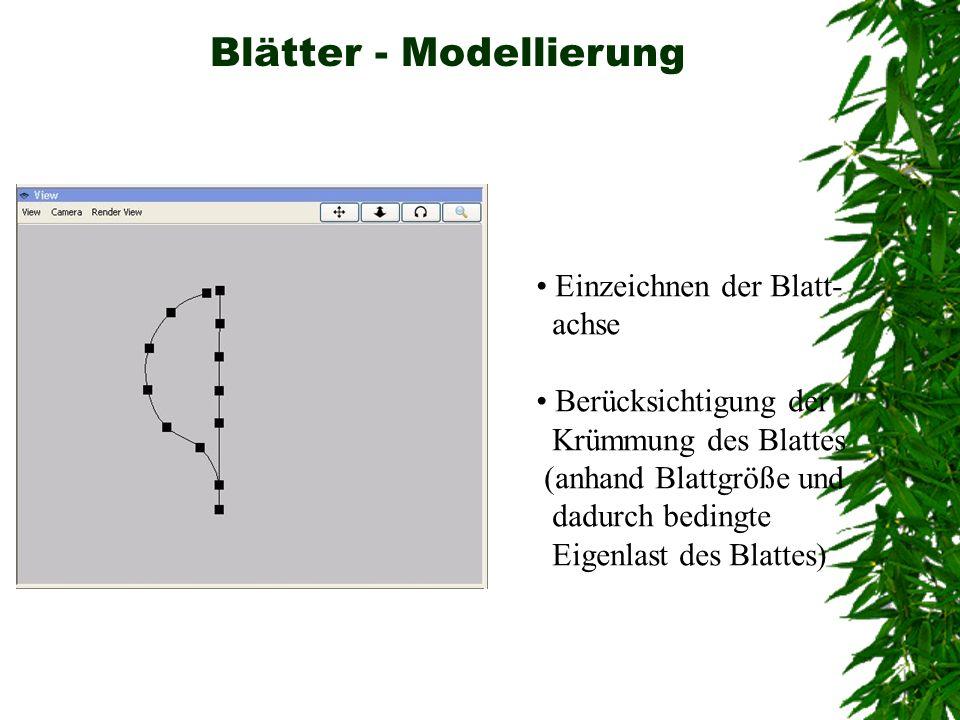 Blätter - Modellierung Einzeichnen der Blatt- achse Berücksichtigung der Krümmung des Blattes (anhand Blattgröße und dadurch bedingte Eigenlast des Bl