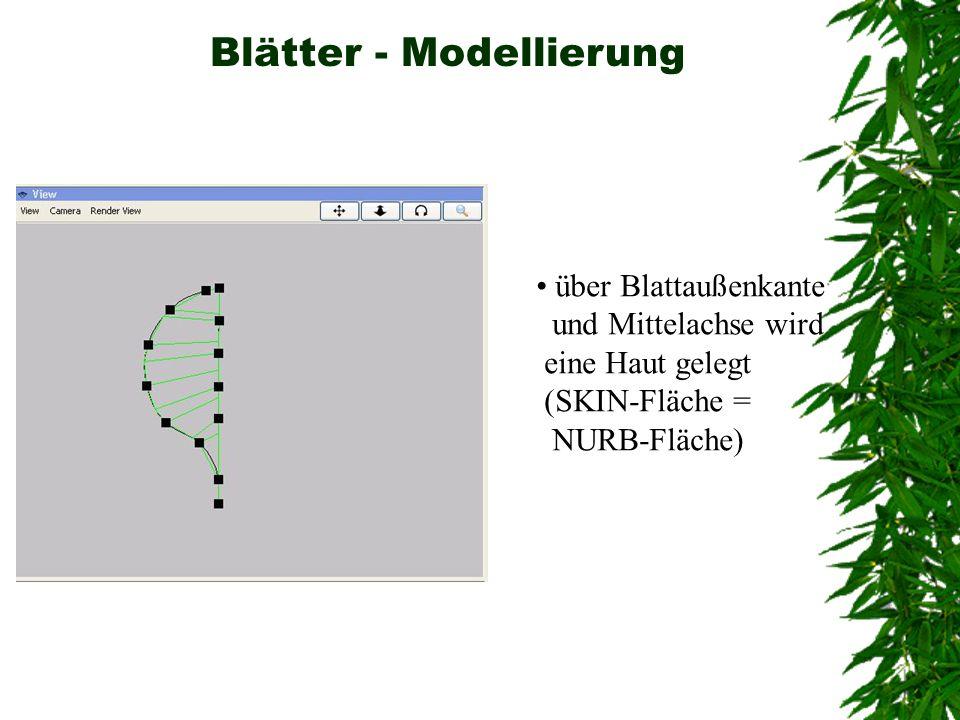 Blätter - Modellierung über Blattaußenkante und Mittelachse wird eine Haut gelegt (SKIN-Fläche = NURB-Fläche)