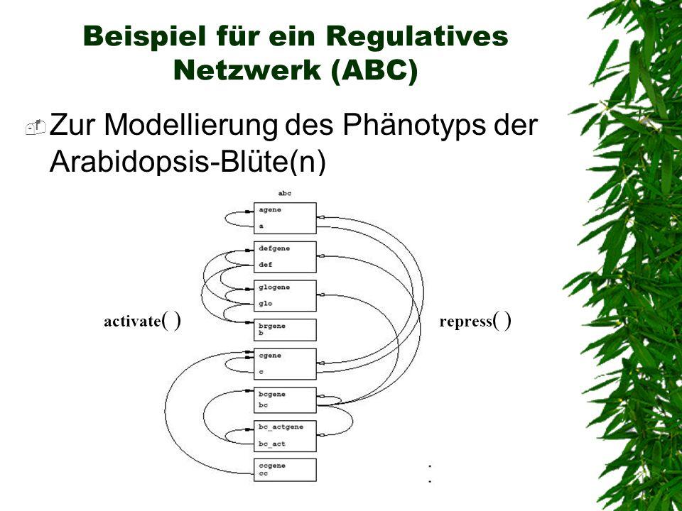 Beispiel für ein Regulatives Netzwerk (ABC) Zur Modellierung des Phänotyps der Arabidopsis-Blüte(n) activate ( ) repress ( )