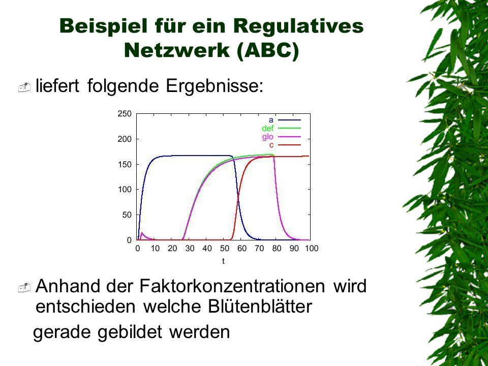 Beispiel für ein Regulatives Netzwerk (ABC) liefert folgende Ergebnisse: Anhand der Faktorkonzentrationen wird entschieden welche Blütenblätter gerade
