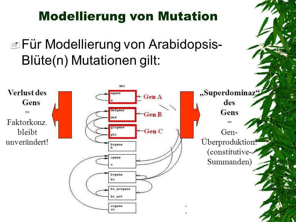 Modellierung von Mutation Für Modellierung von Arabidopsis- Blüte(n) Mutationen gilt: Verlust des Gens = Faktorkonz. bleibt unverändert! Superdominaz