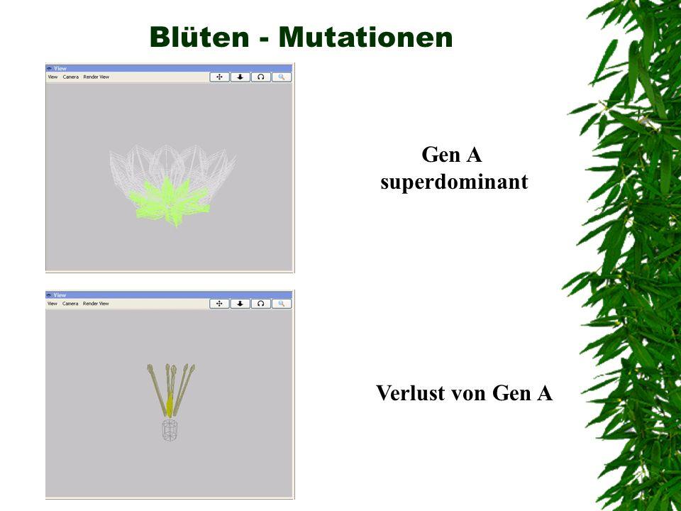 Blüten - Mutationen Gen A superdominant Verlust von Gen A