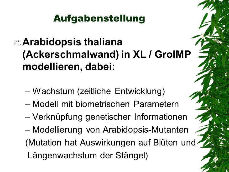 Aufgabenstellung Arabidopsis thaliana (Ackerschmalwand) in XL / GroIMP modellieren, dabei: –Wachstum (zeitliche Entwicklung) –Modell mit biometrischen