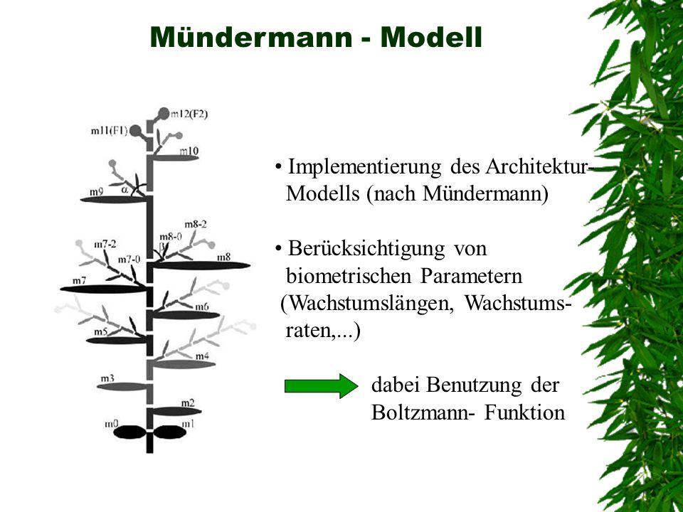 Mündermann - Modell Implementierung des Architektur- Modells (nach Mündermann) Berücksichtigung von biometrischen Parametern (Wachstumslängen, Wachstu