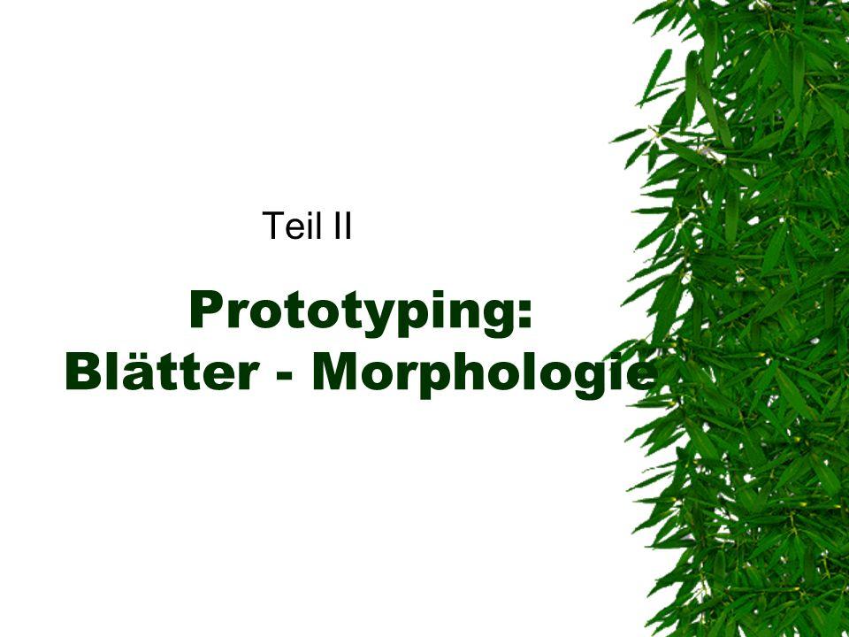 Prototyping: Blätter - Morphologie Teil II