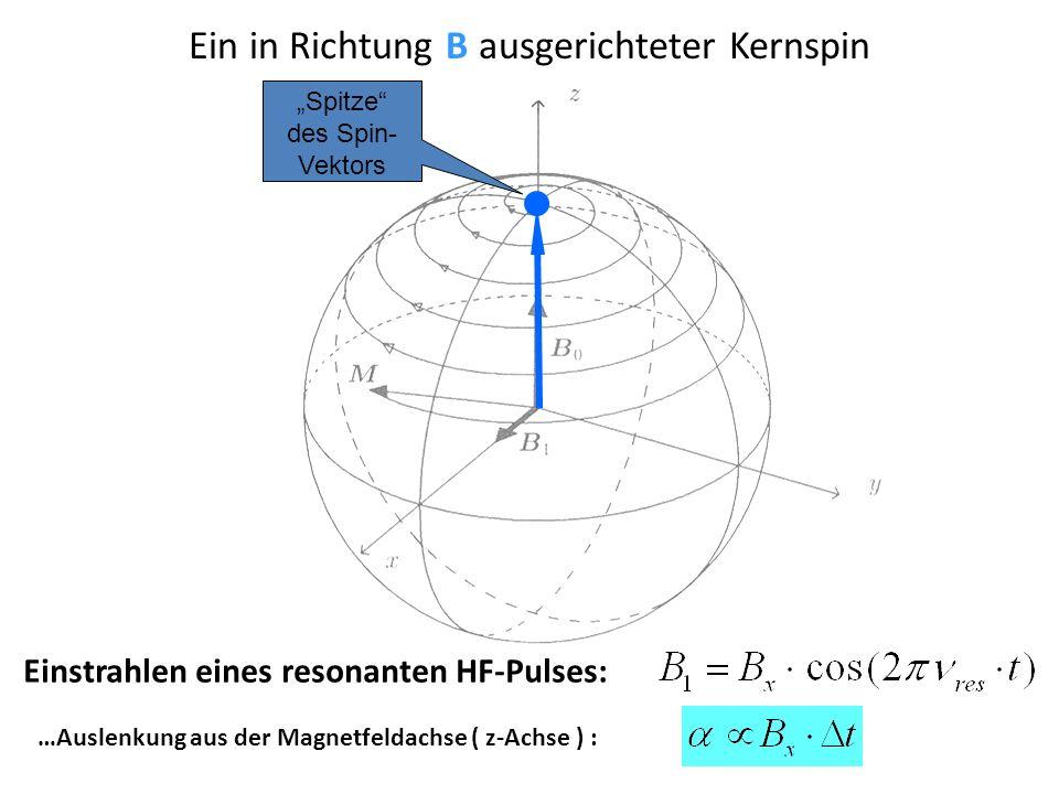 2. Kernspin bei 90° Puls Ein 90°-Puls senkrecht zur B 0 startet die Präzession