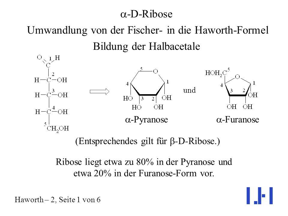 -D-Ribose Umwandlung von der Fischer- in die Haworth-Formel Bildung der Halbacetale Haworth – 2, Seite 1 von 6 und -Pyranose -Furanose (Entsprechendes gilt für -D-Ribose.) Ribose liegt etwa zu 80% in der Pyranose und etwa 20% in der Furanose-Form vor.