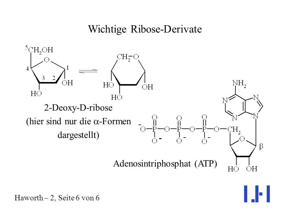 Wichtige Ribose-Derivate Haworth – 2, Seite 6 von 6 2-Deoxy-D-ribose (hier sind nur die -Formen dargestellt) Adenosintriphosphat (ATP)