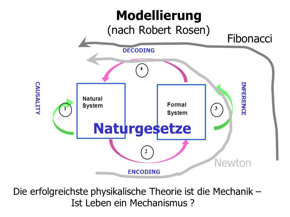 Modellierung (nach Robert Rosen) Natural System ENCODING DECODING Formal System INFERENCE CAUSALITY 1 2 4 3 Naturgesetze Newton Fibonacci Die erfolgreichste physikalische Theorie ist die Mechanik – Ist Leben ein Mechanismus ?