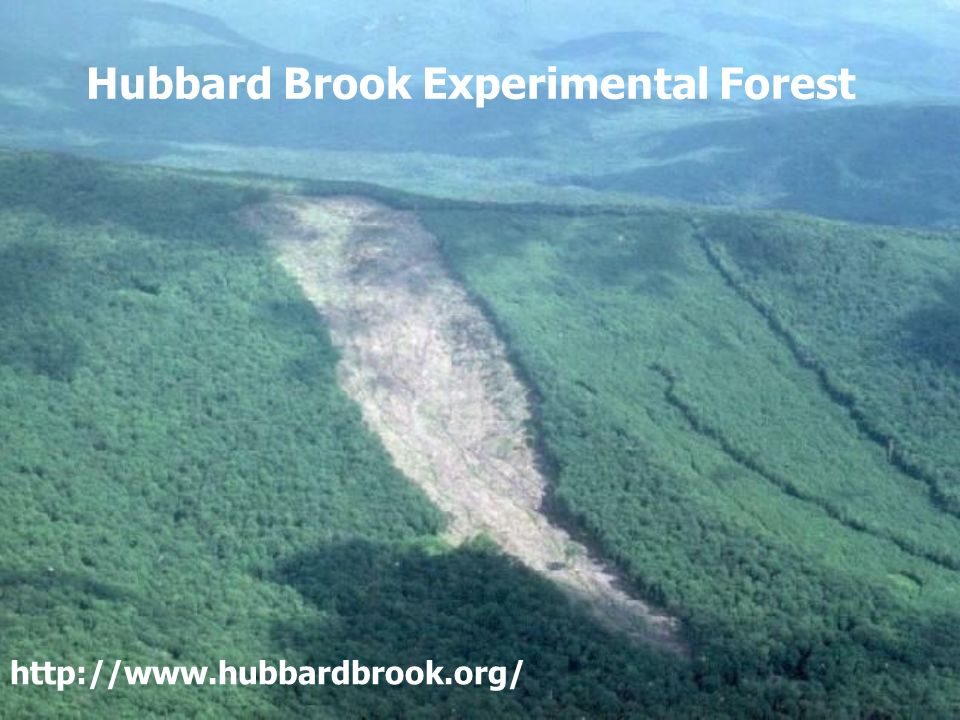 Hubbard Brook Experimental Forest http://www.hubbardbrook.org/
