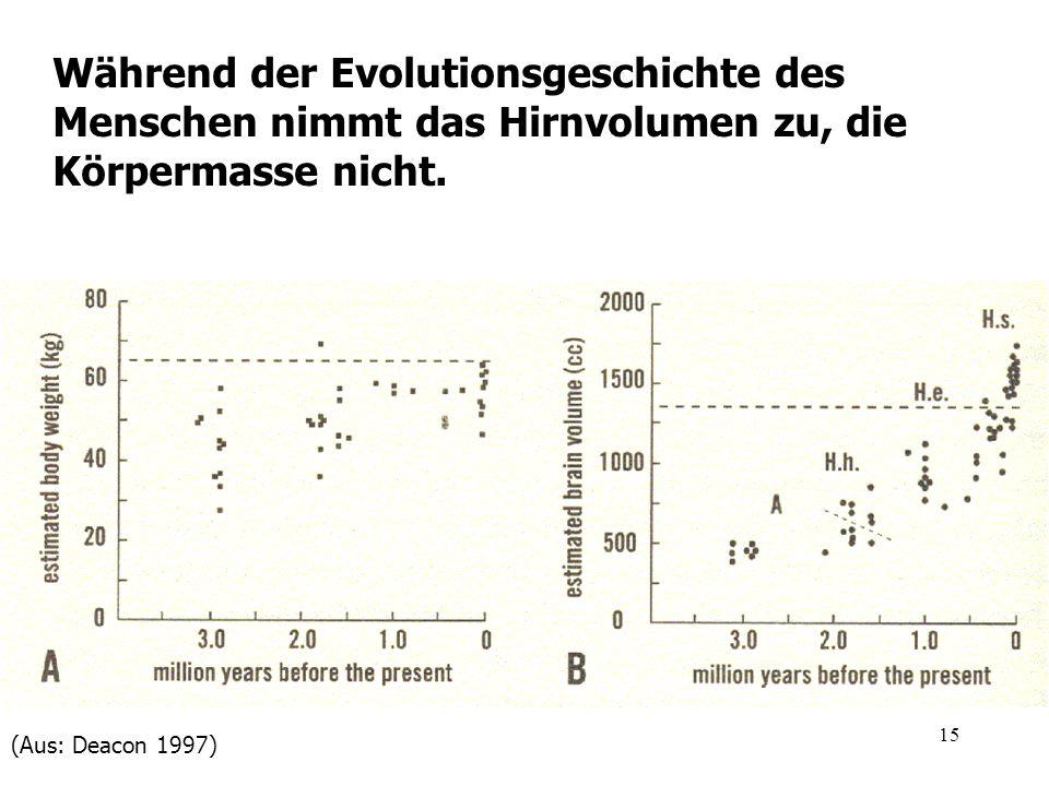 15 Während der Evolutionsgeschichte des Menschen nimmt das Hirnvolumen zu, die Körpermasse nicht. (Aus: Deacon 1997)