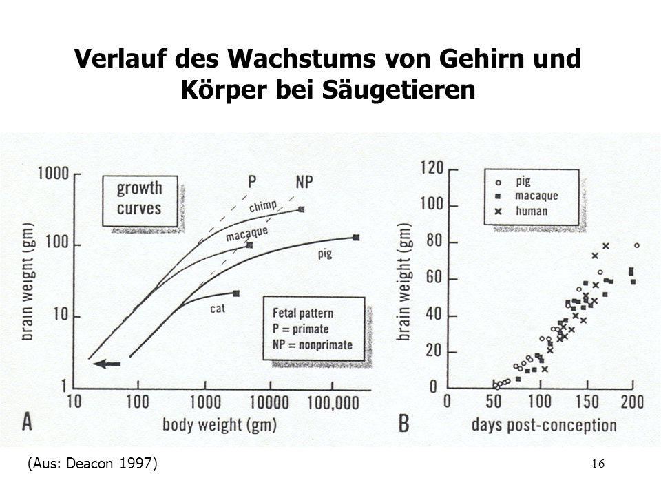 16 Verlauf des Wachstums von Gehirn und Körper bei Säugetieren (Aus: Deacon 1997)