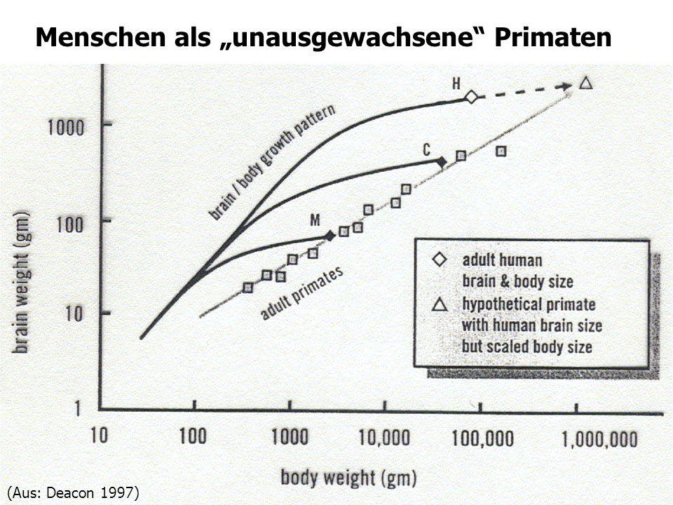 17 Menschen als unausgewachsene Primaten (Aus: Deacon 1997)