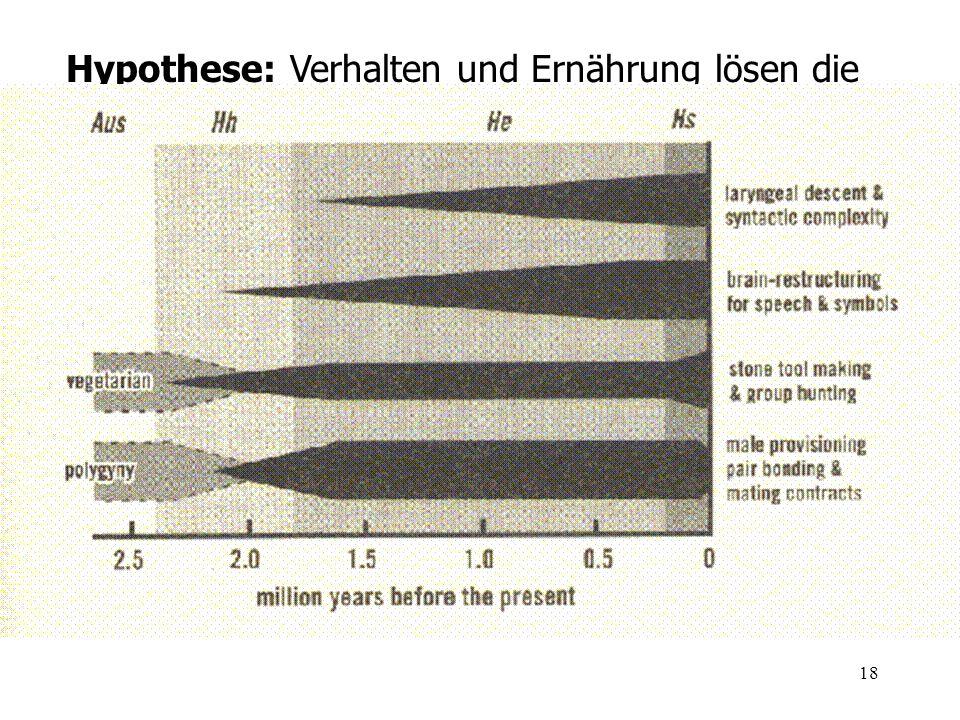 18 Hypothese: Verhalten und Ernährung lösen die Entwicklung des Hirnvolumens aus (Deacon 1997)