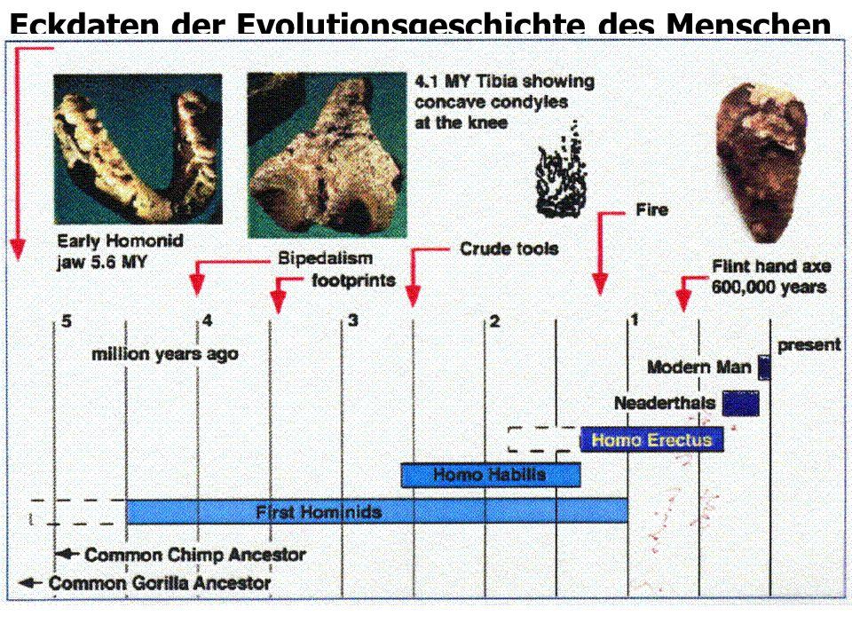 21 Eckdaten der Evolutionsgeschichte des Menschen