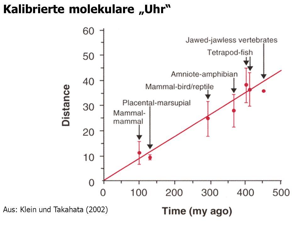 4 Kalibrierte molekulare Uhr Aus: Klein und Takahata (2002)