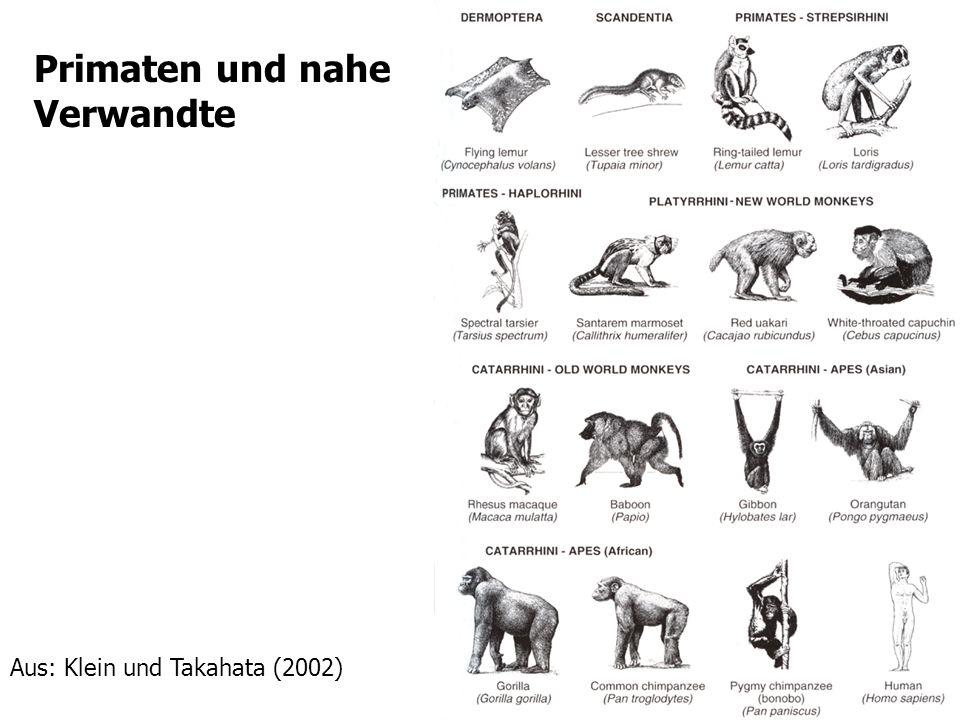 7 Primaten und nahe Verwandte Aus: Klein und Takahata (2002)